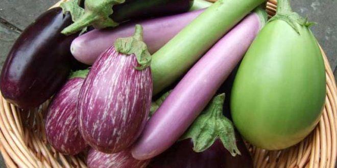 приобретение семян арбуза и баклажан